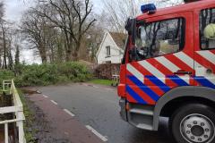 Boom-Langeveenseweg-Geesteren-Foto-2